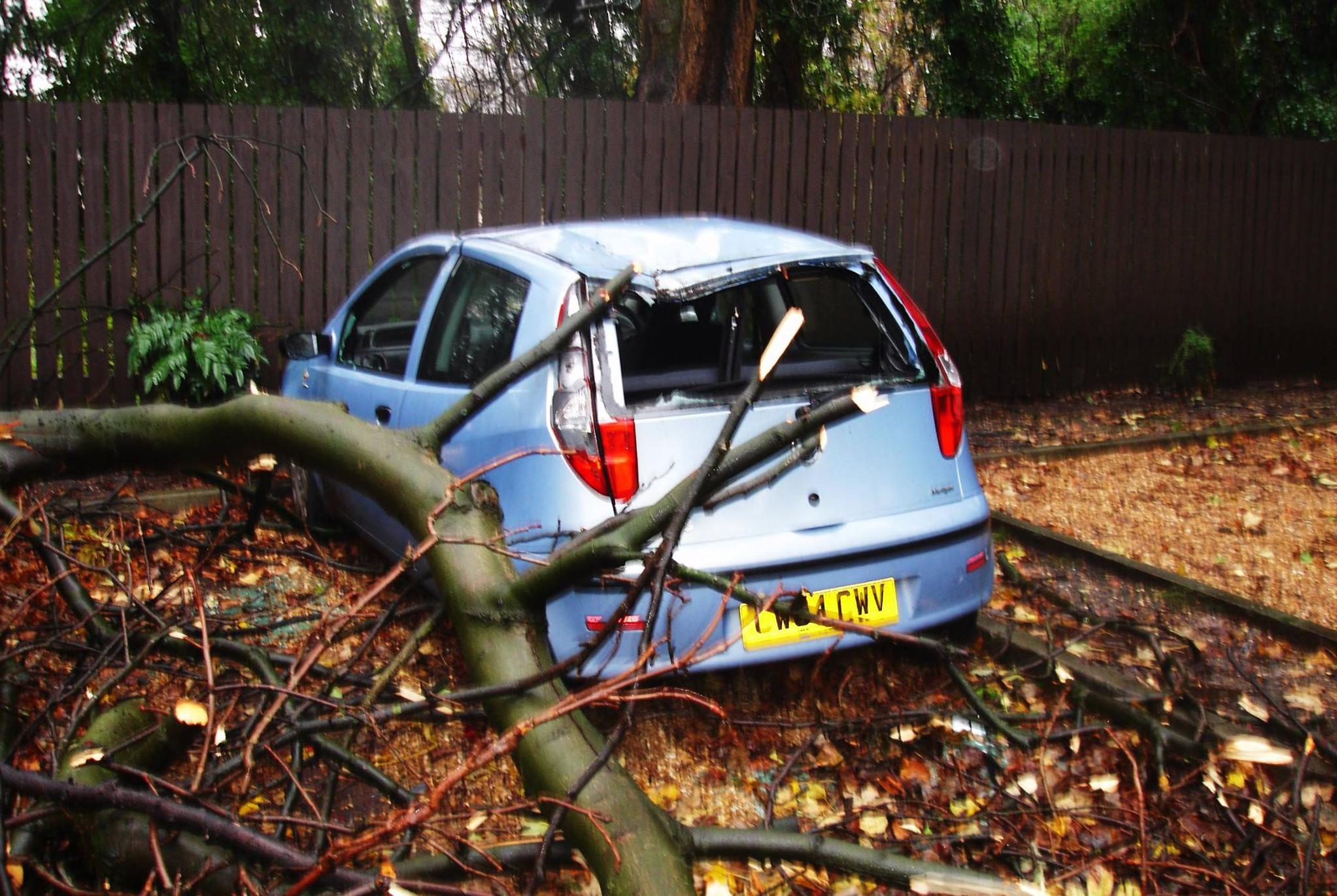 car crushed falling tree vn