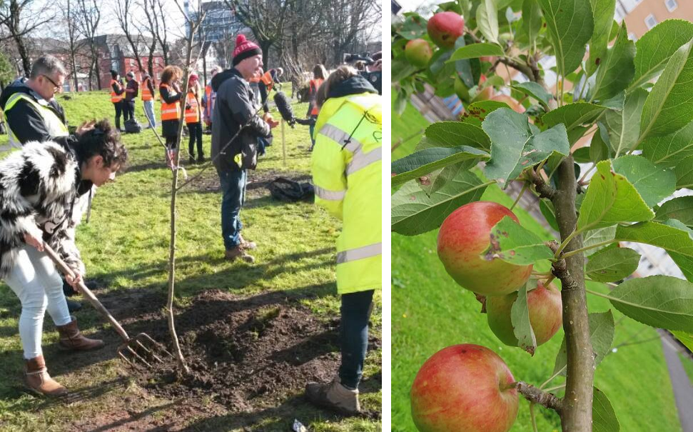 Bez's apple trees on Belvedere Road are now ready for locals to pick and eat